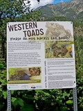 Image for Western Toads - Summit Lake, BC