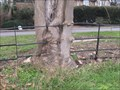 Image for Tree growing through fence at Oakley - Bed's