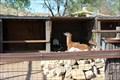 Image for Casa Grande Petting Zoo - Cerrillos, New Mexico