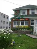 Image for Miami Suntan Palm Tree - Gravenhurst, Ontario, Canada