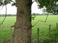 Image for Metal Eating Tree, Twemlow, Cheshire.