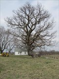 Image for Howard County Trail Tree - Fayette, Missouri