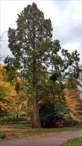 Image for Mammutbaum im Rathenaupark - Hamburg, Deutschland
