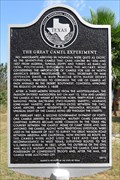 Image for The Great Camel Experiment