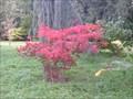 Image for Thorp Perrow Arboretum