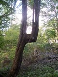 Image for Rock City Trail Tree - Olean, New York