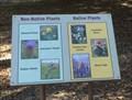 Image for Non-Native & Native Plants - Trabuco Canyon, CA