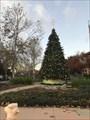 Image for Morgan Hill Christmas Tree - Morgan Hill, CA