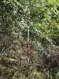 Image for TB 1322-10 Nad lesíkem