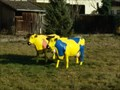 Image for Yellow Cows - Bad Imnau, Germany, BW
