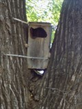 Image for Raccoon Boxes - Martin Park - OKC, OK