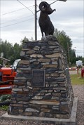 Image for Largest Stone's Sheep in the world - Fort Nelson, BC Canada