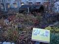 Image for Franklin Park Conservatory Carnivorous Plants - Columbus, OH