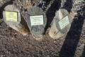 Image for Types of Lower Mojave Desert Sagebrush - Clark County Museum - Henderson, ON