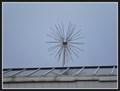Image for Fireworks Tree (Sportovní) - Brno, Czech Republic