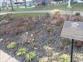 Image for The Treaty of Ghent Rose Garden - Buffalo, NY