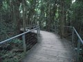 Image for Rainforest Boardwalk - Blue Mountains - NSW - Australia