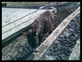 Image for Eldorádo - Brno, Czech Republic