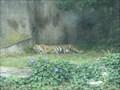 Image for San Francisco Zoo Tiger Enclosure  - San Francisco, CA