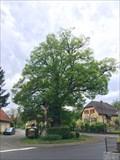 Image for Le Tilleul de Berrwiller, Haut-Rhin/FR