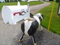 Image for Holy Cow! You've Got Mail.