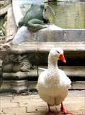 Image for Barcelona Cathedral Cloister Geese - Barcelona, Spain