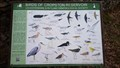 Image for Birds of Cropston Reservoir - Bradgate Park, Leicestershire