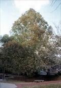 Image for Birmingham Botanical Gardens - Sycamore