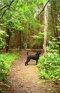Image for Crane Park - Guelph Ontario (off-leash)