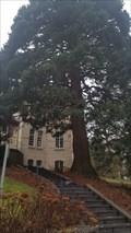 Image for Sequoiadendron giganteum  à l'arboretum de la Citadelle - Namur - Belgique