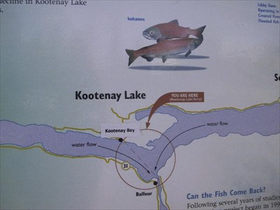 Kootenay Lake Fishing Kootenay Lake Fish And