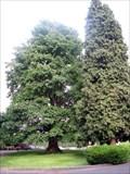 Image for Joseph Foster tree, Tukwila, WA