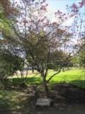 Image for MLK Memorial Tree - Corvallis, OR