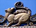 Image for Opossum of Protection - Philadelphia, PA