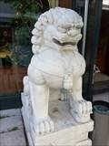 Image for Chinese Lions - Schwabengalerie Stuttgart-Vaihingen, Germany, BW
