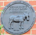 Image for Working Donkeys - Covent Garden, London, UK