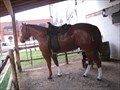 Image for CRZ Horses in Panguitch, Utah