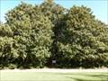 Image for Historic Washington Magnolia - Historic Washington State Park in Washington, AR