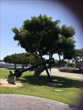 Image for Freedom Tree - Long Beach, CA
