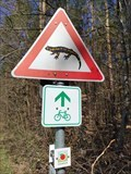 Image for Fire Salamanders Crossing - Nehren, Germany, BW