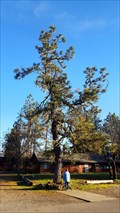 Image for Smokejumper Tree - Siskiyou Smokejumper Base Museum