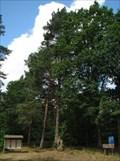 Image for Arboretum im Walderlebniszentrum Ehrhorn