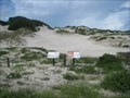 Image for TALLEST -- Dune in Florida