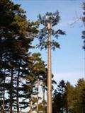 Image for Orange Tree Mast - Old Warden, Bedfordshire, UK