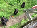 Image for Feed the Bears - Parc Oméga - Montebello, QC