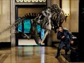 """Image for American Museum of Natural History, NYC - """"Night at the Museum"""""""