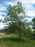 Image for Friedensbaum/Hoffnungsbaum - Horb, Germany, BW
