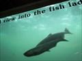 Image for Bonneville Dam Fish Ladder - Stevenson, WA
