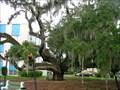 Image for Historic Maltby Liveoak ~ Palatka Florida
