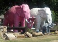 Image for Pink Elephants, Giraffes, and Buffalo just for starters - Haubstadt,  IN